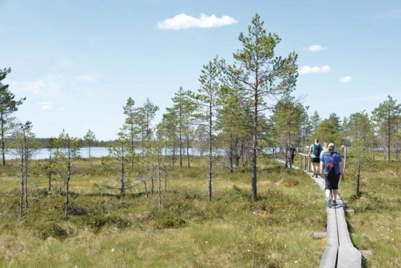 Retkeilijät kävelevät pitkospuilla Kauhanevalla