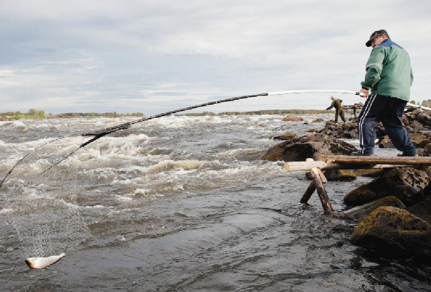 Kalastajia Tornionjoen rannalla