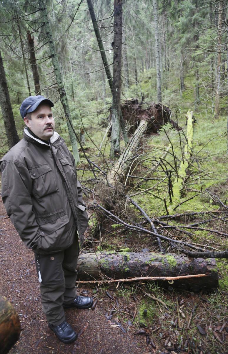 Porvoon kaupungin metsätalousinsinööri Tommi Laakkonen on kouluttautunut myös metsäluonnon kartoittajaksi. Porvoon Sikosaaressa on useita suojelualueita, joissa puusto on varsin vanhaa.