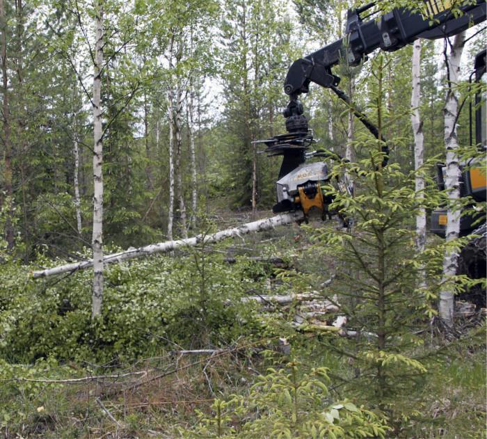 Pohjois-Karjala lisää puun käyttöä energialähteenä ja tavoitteena on korvata kaikki lämmityksessä käytettävä öljy metsäenergialla vuoteen 2030 mennessä.